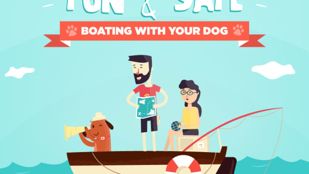 dog-boating-safety