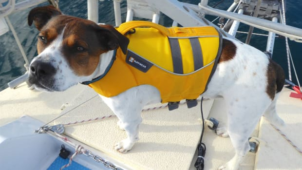 Baxter the dog in his lifevest, waiting to go ashore