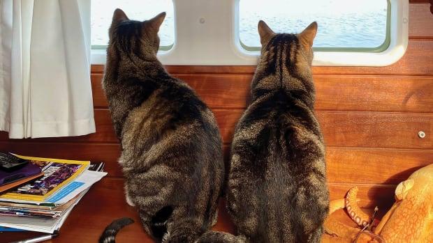 01-LEAD-CatsAboard11