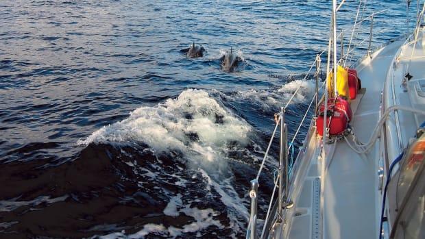 01-LEAD-Day-three---dolphins.-300-dpi