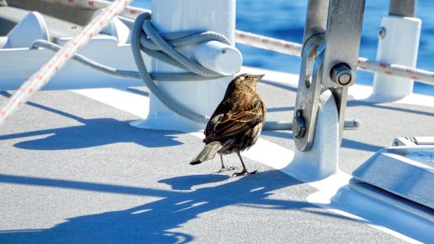 BirdonBoard