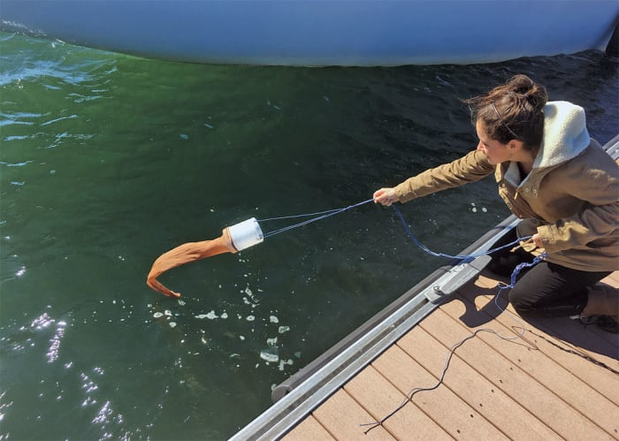 Citizen Science, Sailors and the State of Our Oceans