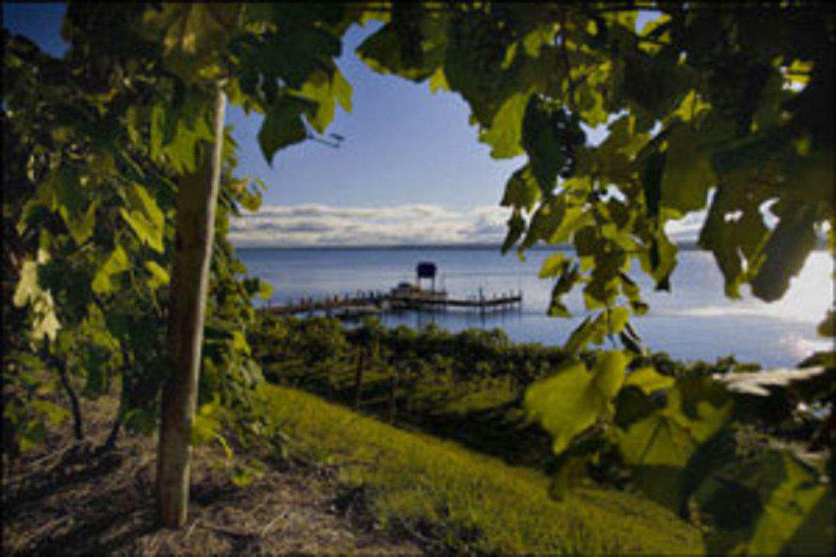 The view from Goose Watch Winery. Photo courtesy of goosewatch.com