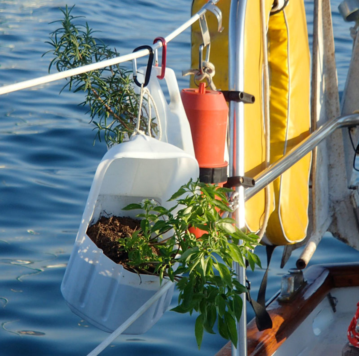 Fresh herbs from an onboard garden