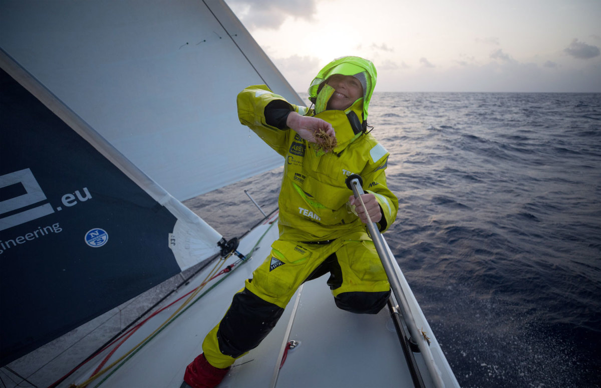 Team Brunel crewmember Nina Curtis cleans more of the dreaded Sargassum weed off the bow