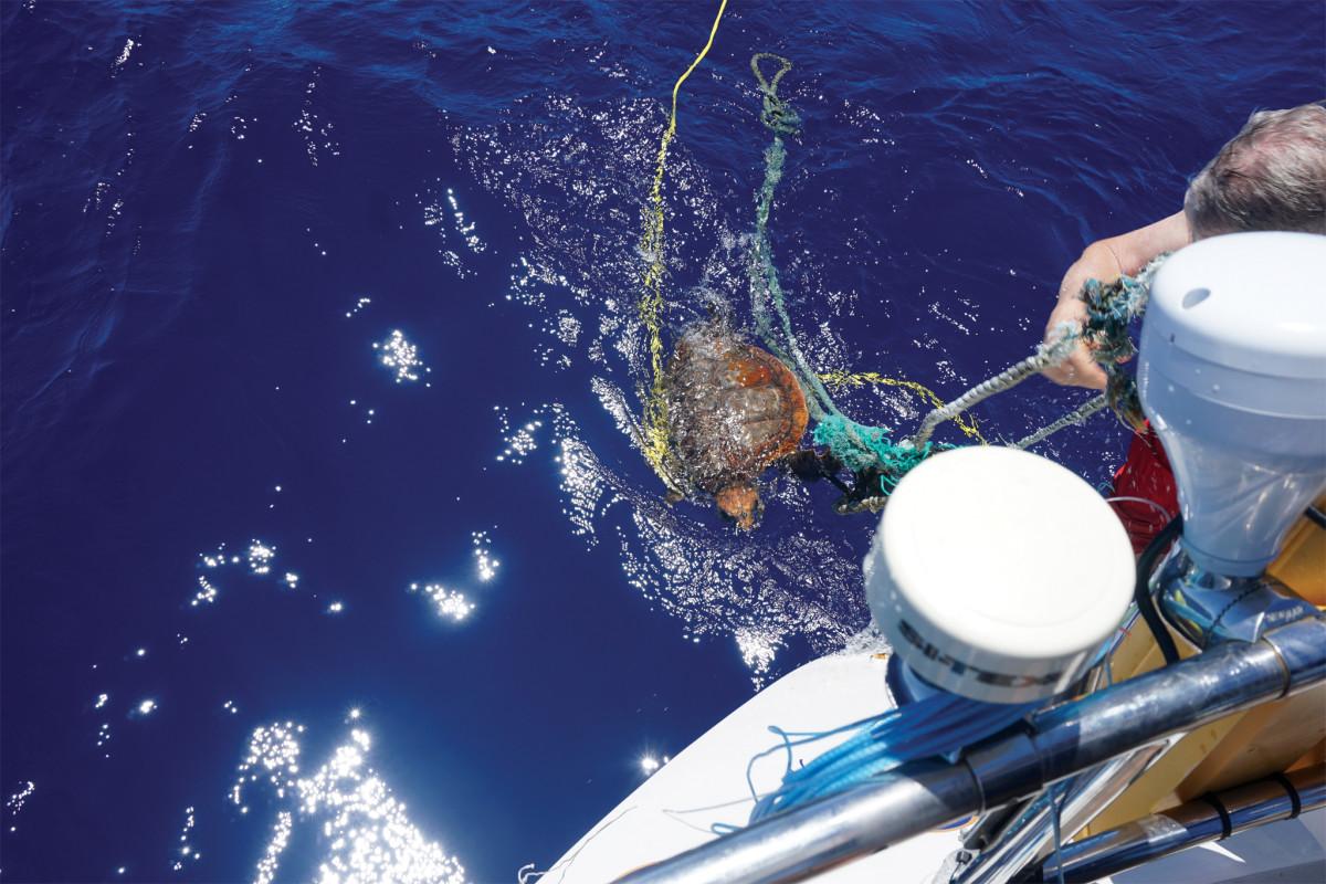 04-Turtle-rescue