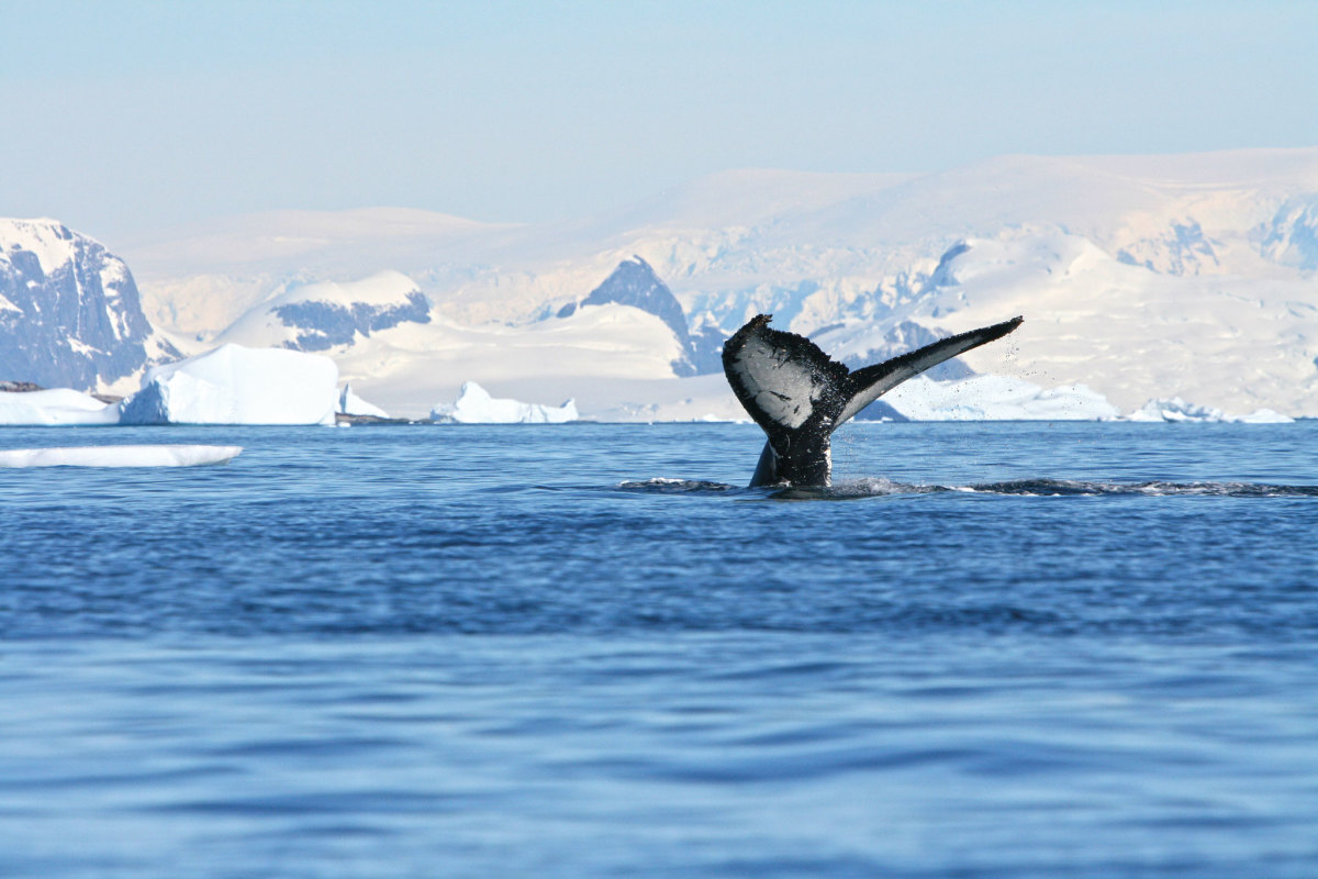 The wild beauty of Antarctica is unforgettable