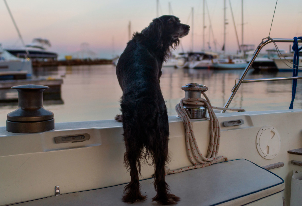 Some simple rules will make for a happy dog-boat relationship