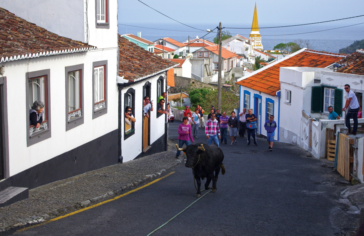 The running of the bulls in Terceira