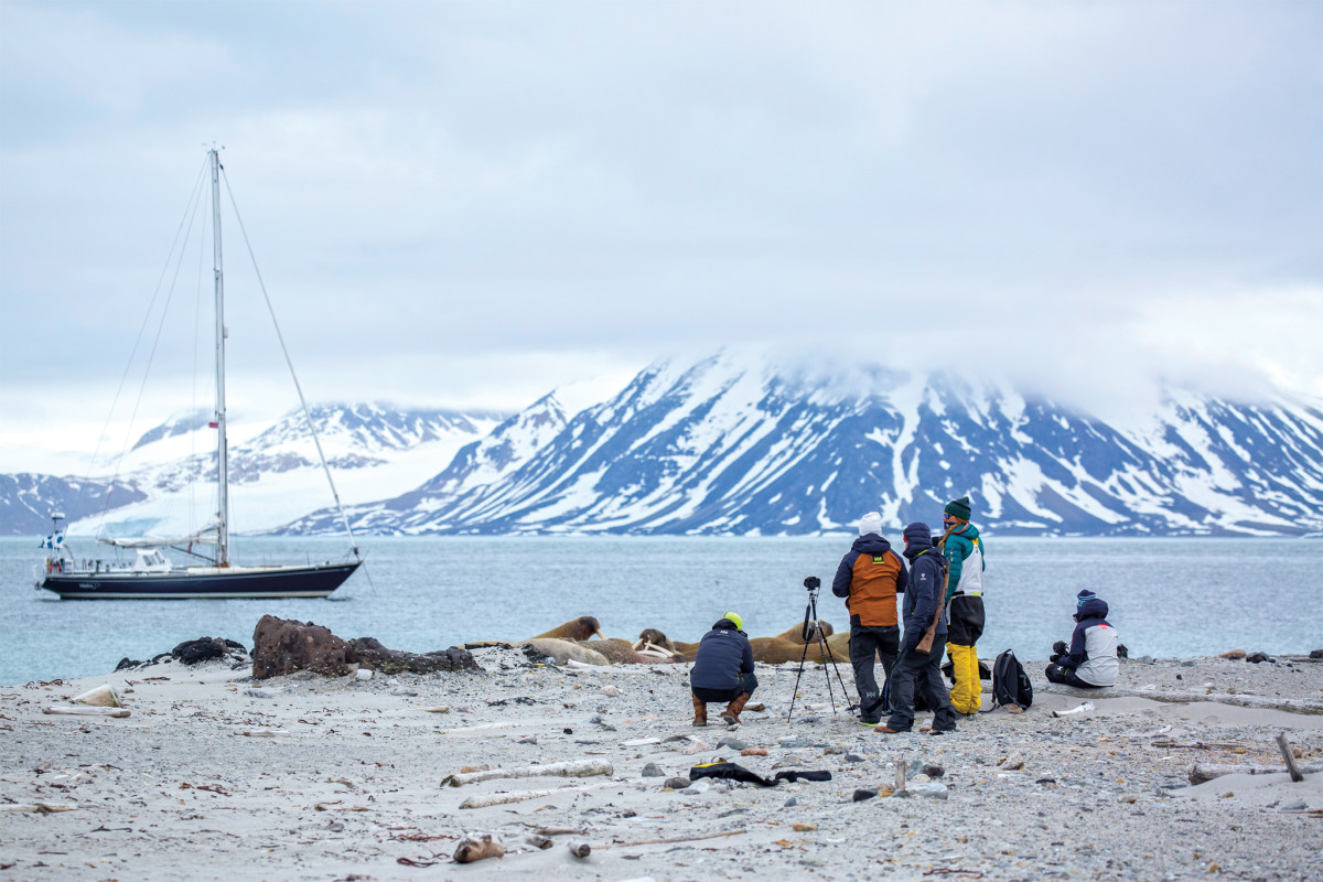 The crew photographs a walrus colony with Isbjörn in the background