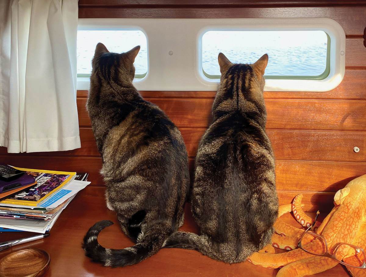 Nomad (left) and Gypsy stand watch aboard Bumpy Nightundefined